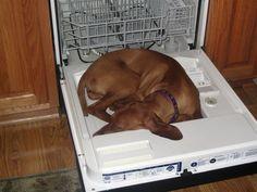 12 photos qui prouvent que les chiens dorment n'importe où ! Attendez de voir la photo #5 | TV4 NOUVELLES