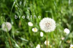 Breathe: by YES Psychology & Consulting. photo taken by Kash Thomson. www.yespsychology.com.au