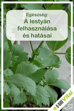 Relax, Medical, Healthy, Plants, Hungary, Keep Calm, Plant, Health, Med School