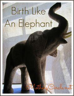 Birth like an elephant. Elephant Birth, Baby Vision, Birth Art, Birth Affirmations, Childbirth Education, Pregnancy Care, Natural Birth, Pregnant Mom, Doula