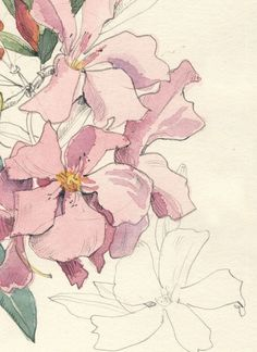 nerium oleander painting - Google Search