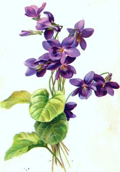 Image result for anna griffin purple flower vector