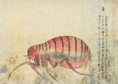 Kenbikyo Mushi No Zu