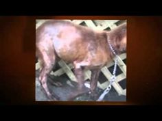 Skin Problems In Dogs  Is Raw Diet Good? - Pet Skin Repair News #pet #skin_problems_on_dogs #dog_care