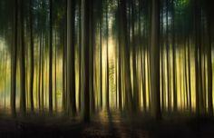 Mystery Woods......... - Wim Schuurmans FotografieWim Schuurmans Fotografie |