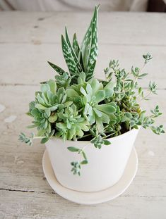 Love succulents. I should totally make one of these for my desk.