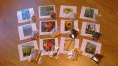 obrazky rostlin a seminka
