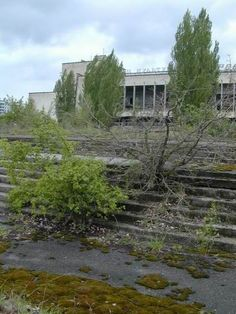 Overgrown steps, Chernobyl. I want to go here someday...