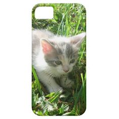 Cute Young Kitten Cover For iPhone 5/5S!  #kitten #zazzle #store #iphone #5 #gift #present #phone #cover #customize #cat #cute http://www.zazzle.com/conquestkitty*