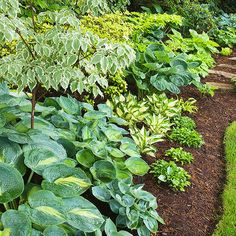 Like the border of mulch and different hostas