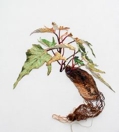 ANA TERESA BARBOZA: WEAVING THE MOMENT - Root Structure - embroidery on canvas