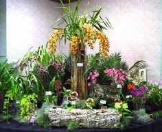 Exquisite Cymbidium Orchid Show Orchid Festival