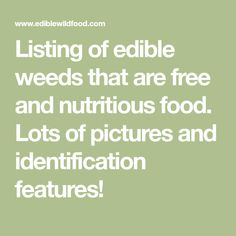 Listing of edible weeds that are  free and nutritious food. Lots of pictures and identification features!