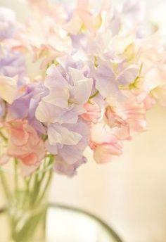 春婚におすすめのお花6*スイートピー♡  ふわふわの花びらがきれいなスイートピーも春のお花*花言葉は「優しい思い出」です♡  \春のお花で春色ウェディングを作りたい♡/春シーズンに一番綺麗に咲くお花まとめ*にて紹介している画像