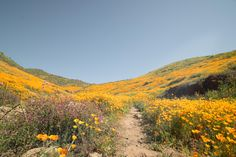 Californias recent super bloom reminds me of What Dreams May Come [OC] [60004000] #reddit