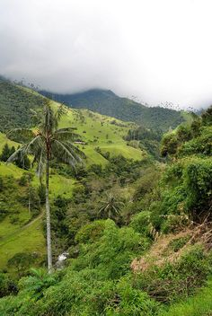 valle de cocora, salento, quindio, colombia