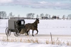 Amish ride in the cold.