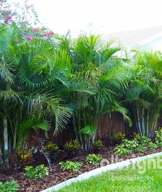 If you are working with the best backyard pool landscaping ideas there are lot of choices. You need to look into your budget for backyard landscaping ideas Tropical Backyard Landscaping, Palm Trees Landscaping, Tropical Garden Design, Florida Landscaping, Privacy Landscaping, Florida Gardening, Backyard Garden Design, Outdoor Landscaping, Outdoor Gardens