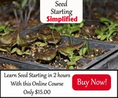 Seed Starting Banner $15 450x375 copy