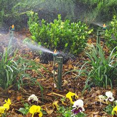 Designing And Planning Your Drip Irrigation System Drip