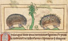 Hedgehogs2  Unknown  English, about 1250 - 1260
