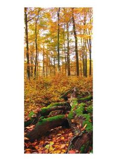 Herbstlicher Buchenwald Motivdruck Papier