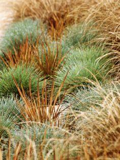 Festuca Elihah Blue Libertia Formosa and Carex Flagellifera Selection of Ornamental Grasses