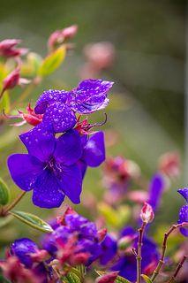 Botanic Flowes   by Mykel46