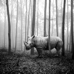 Monochrome Photography Awards – Contest Winners Announced! | MONOVISIONS