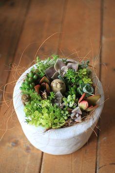 多肉植物 寄せ植え : 多肉植物寄せ植え販売 アトリエ華もみじ