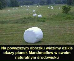 Read from the story Memy i memiątka ✔ by pedalsko (ʙᴇᴋꜱᴀ) with 759 reads. Love Memes, Best Memes, Dankest Memes, Jokes, Stupid Funny Memes, Wtf Funny, Funny Images, Funny Pictures, Polish Memes