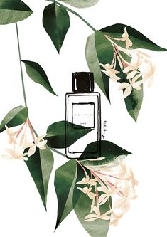 VO | Valérie Oualid : Agent d'illustrateurs | Cécile Huang | Le parfum - Jasmin Cecile, Illustration, Plant Leaves, Jasmin, Plants, Nature, Artist, Fragrance, Naturaleza