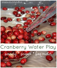 Quick Cranberry Science and Thanksgiving Sensory Play Activity Cranberry Science Sensory Activity Fine Motor Play Science Activities For Kids, Autumn Activities, Sensory Activities, Play Activity, Preschool Ideas, Preschool Science, Preschool Farm, Steam Activities, Easy Science