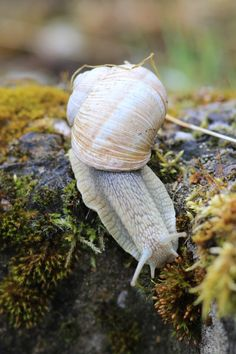 Snail by Thirad