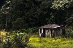 velha casa de madeira by Fabio Oliveira