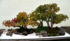 bonsai pots, marble trays, penjing