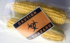 800 Scientists Demand Global GMO Experiment End www.infowars.com