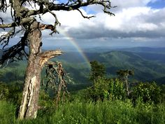I went looking for rainbows on the Blue Ridge Parkway in NC yesterday. [OC] [3264x2448]