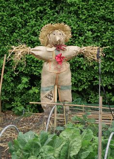 A not-too-scary-scarecrow