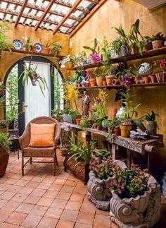 As diversas espécies de orquídeas estão expostas em prateleiras  e sobre mesa rústica comprada em um antiquário
