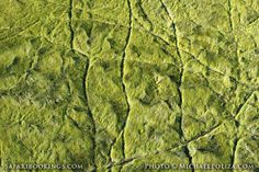 Animal paths @ Okavango Delta in #Botswana. See #Okavango travel guide: http://www.safaribookings.com/okavango