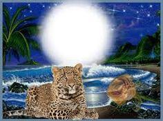 Kuvan tulos läpinäkyville villieläinten kehyksille png