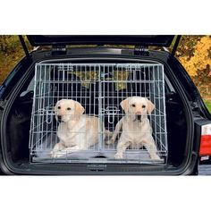39 meilleures images du tableau cage chien en 2019. Black Bedroom Furniture Sets. Home Design Ideas