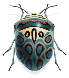 "Bug from Africa is a ""Sphaerocoris annulus"", also known as Picasso Shield Bug. I thought this one must be a hoax but no, it is real...amazing!"