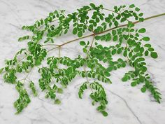 Moringa contain 46 antioxidants, 18 amino acids and is a complete protein. This is a very special dwarf variety from India. Unlike other varieties of moringa, this tree will remain short and is very well suited to container growing, which makes growing it Herb Seeds, Garden Seeds, Moringa Benefits, Seeds Online, Seed Catalogs, Rare Flowers, Exotic Fruit, Seed Pods, Growing Herbs
