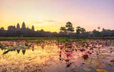 The sunrise over Angkor Wat was one of my Most Beautiful Sunrises! Beautiful Sunrise, Most Beautiful, Angkor Wat, Sunrises, Dolores Park, Spaces, Travel, Breaking Dawn, Viajes