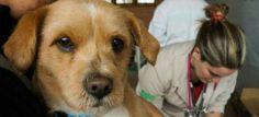 #Vacinação de cães e gatos gratuita no Recife, neste sábado (10) - TV Jornal: TV Jornal Vacinação de cães e gatos gratuita no Recife, neste…
