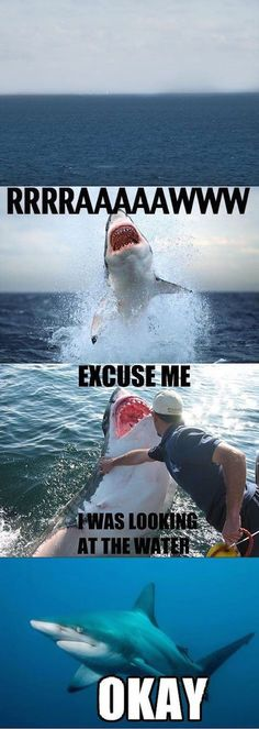 Funny pictures about Excuse me shark. Oh, and cool pics about Excuse me shark. Also, Excuse me shark. Crazy Funny Memes, Really Funny Memes, Stupid Funny Memes, Funny Relatable Memes, Haha Funny, Funny Cute, Hilarious, Funny Stuff, Super Funny