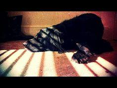 Leave a sleeping dog lying