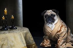 Three Adorable Pugs Dressed up as Characters from Game of Thrones - My Modern Met
